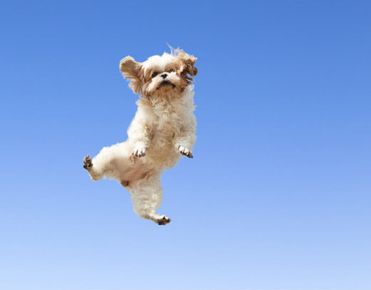 dogs-jumping-for-joy-18